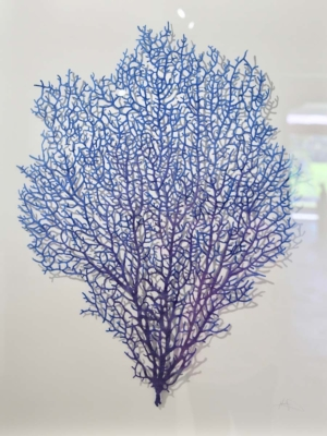 Meredith Woolnough Coral Fan