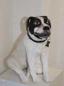 American Boxer Dog