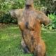 052-1 Emilia Krumm Amazon  resin Garden 2021